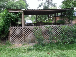 The big coop with vines added for sun protection and bushes for dog protection.